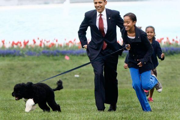Además de que la familia presidencial tiene esta raza porque es perfecta...
