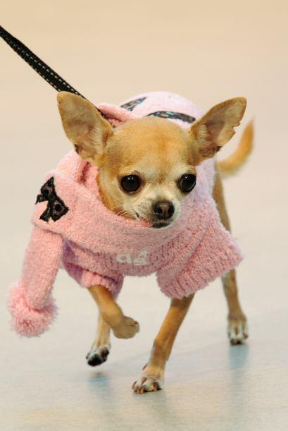 Perros de diferentes razas hicieron gala de sus mejores atuendos para un...
