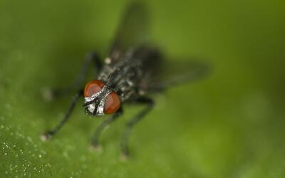 El área de la Bahía ya no puede más con las moscas.