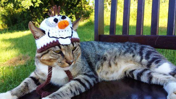 Queremos a un Olaf gatuno.