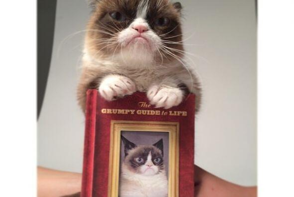 El libro se titula 'The Grumpy Guide to Life: Observations by Grumpy Cat'.