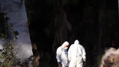Cinco cadáveres fueron hallados enterrados en la oficina de una asociaci...
