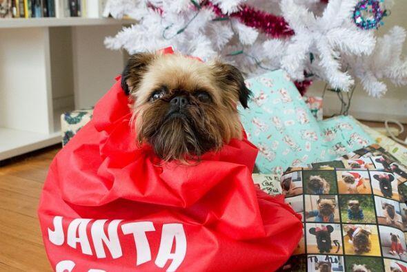 Seguro muchos querrían ese saco de Santa como regalo.