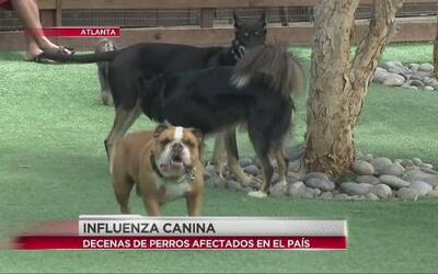 Cuida a tu mascota de la influenza canina