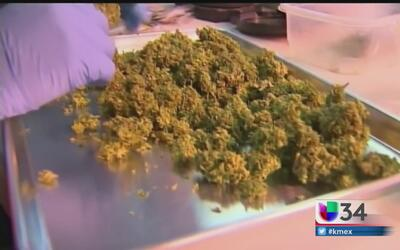 Polémica y división por la legalización de la marihuana en California