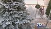 ¿Por qué aumentó el precio del arbolito de navidad?