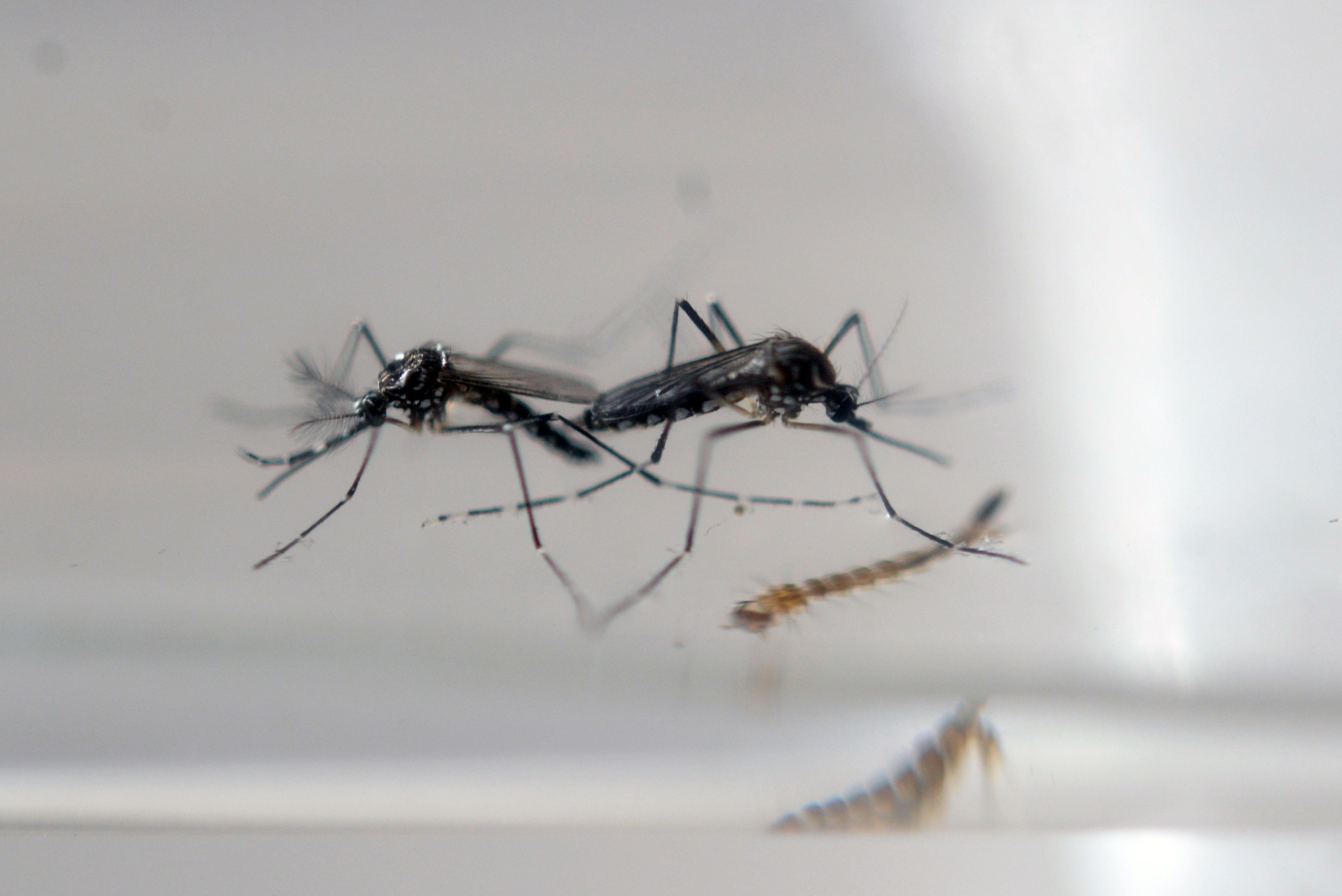 La prevención está enfocada en acabar con el mosquito.