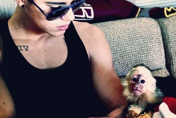 El controversial Justin Bieber presentó a su mascota un mono capuchino l...