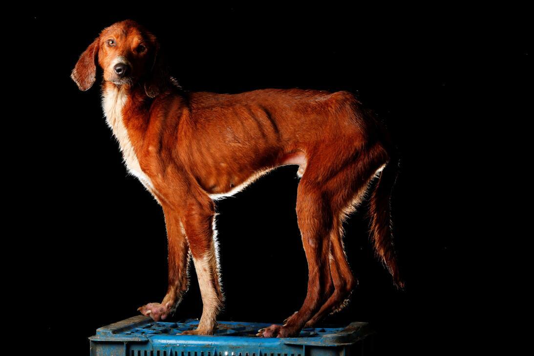 Cachorrón (Big Puppy), got his name because, despite being an adult dog...