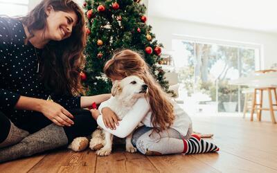 Se sugiere que los dueños de las mascotas no sean los niño...