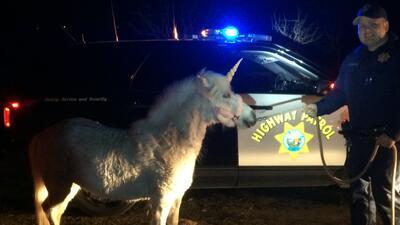 Un pony disfrazado como unicornio movilizó a las autoridades de Madera.