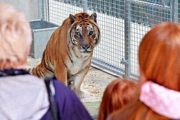 Woodside es un parque abierto al público que  mantiene a los animales en...