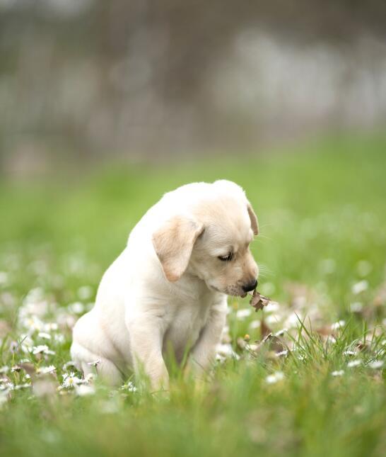Una caminata tranquila en compañía de nuestra mascota puede ser un compo...