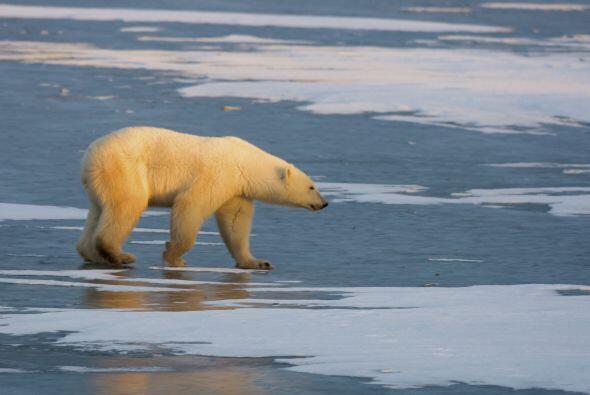 Su principal amenaza es el Cambio Climático. La reducción...