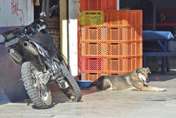 """Algunos lo llaman """"Hachi"""", emulando al famoso perro japon&eacu..."""