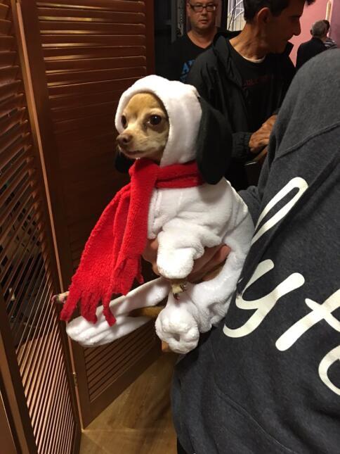 Snoopy en Despierta América
