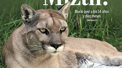 La mascota de los Pumas falleció tras 14 años de vida.