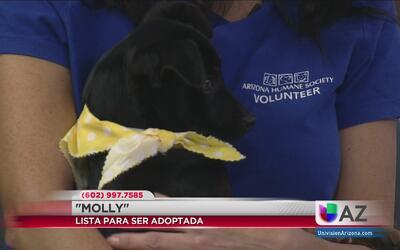 Eventos para ejercitarse, unir a la comunidad y ayudar a las mascotas