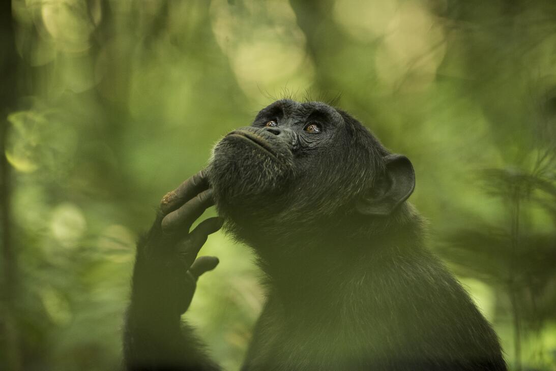 El chimpancé pensador, las fauces del cocodrilo y un rayo entre nubes: l...
