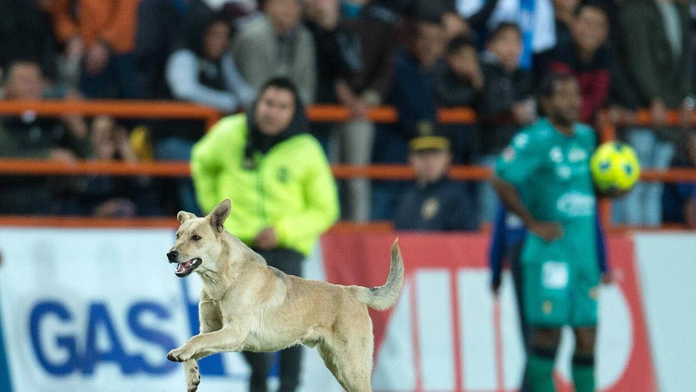 El can corrió por el terreno de juego y hasta se hizo amigo del d...