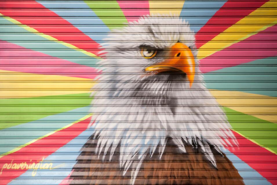 Especie: Aguila Calva; Artista: Peter Daverington