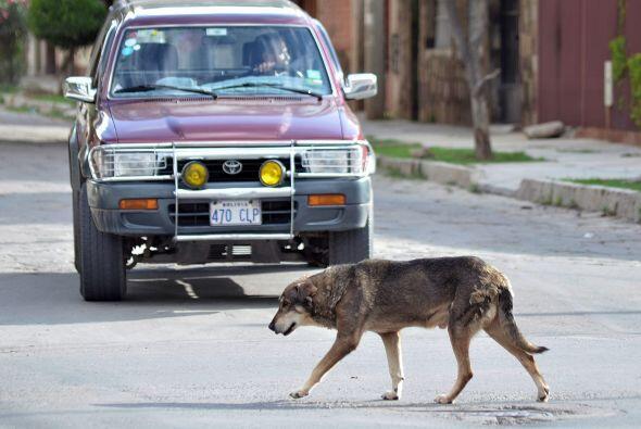 """El """"Hachi"""" boliviano no paraba de llorar en la esquina donde o..."""