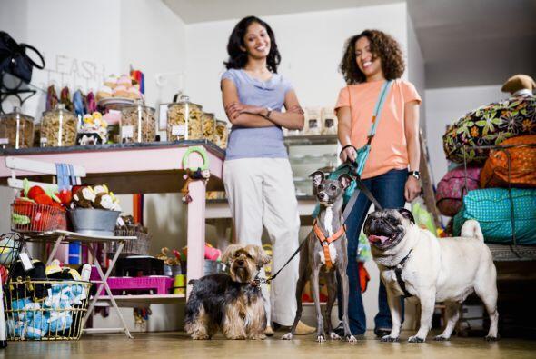 Es básico para una persona con mascotas adquirir ciertos hábitos para ha...