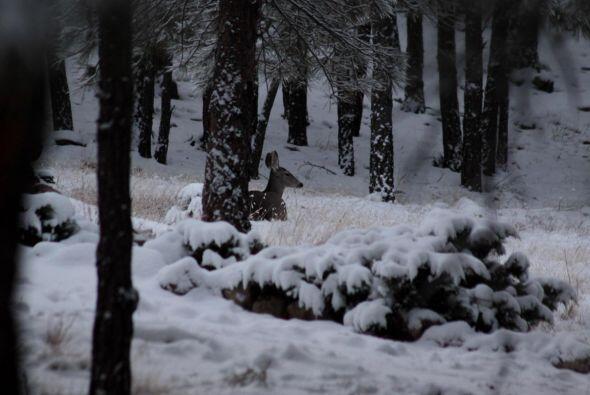 Nieve y muchas luces son la perfecta decoración para los árboles en las...