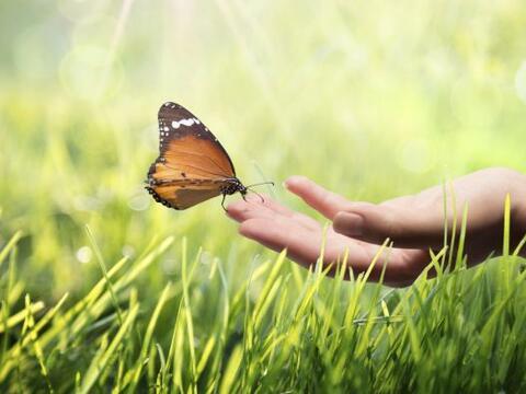 Nuestras manos son verdaderos transformadores de energía, la punt...