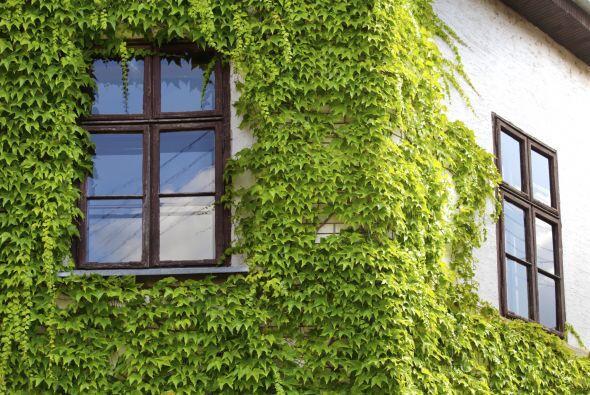 El llenar tu casa de plantas por dentro y por fuera puede hacer una gran...