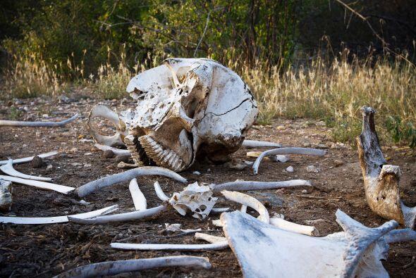 Según la ECF, la crisis de la caza furtiva es ahora demasiado grande par...