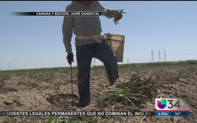 Salinidad del agua, otro problema para agricultores