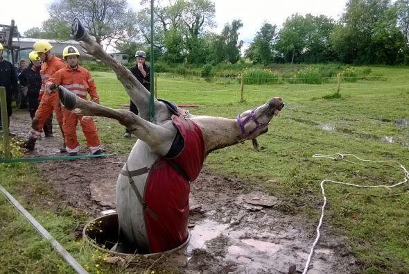 El caballo estuvo atrapado durante horas en el pozo con agua en Hinckley...