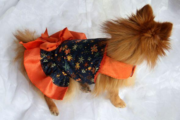 ¡Tus perritos lucirán súper coquetos y adorables!