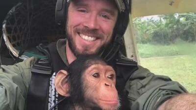 Este bebé chimpancé rescatado hace de 'copiloto' en su vuelo hacia un nuevo hogar