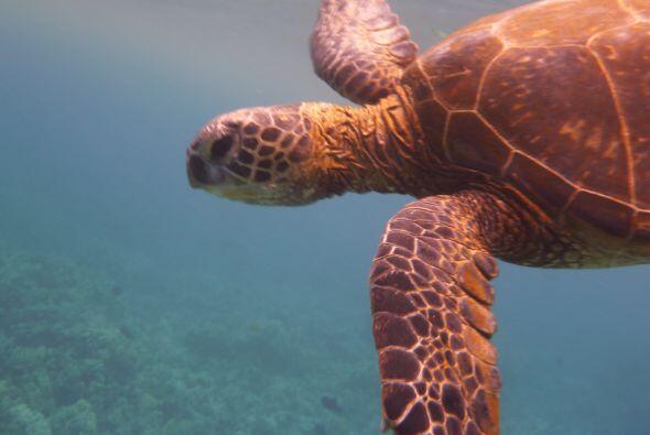 Así fue como Raúl acompañó a una tortuga gigante.