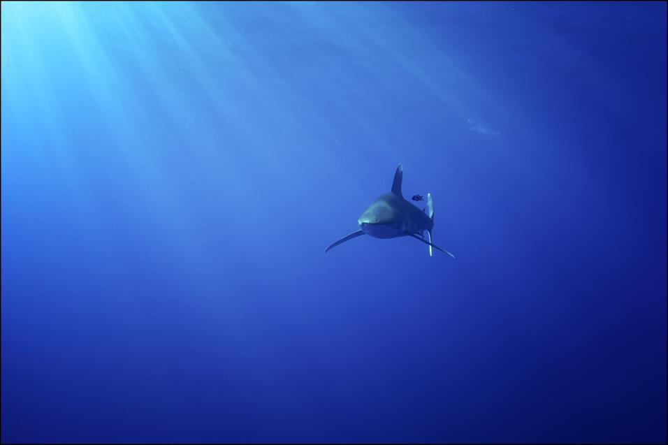 Si donde nadas notas que los peces y demás fauna marina se comienza a co...
