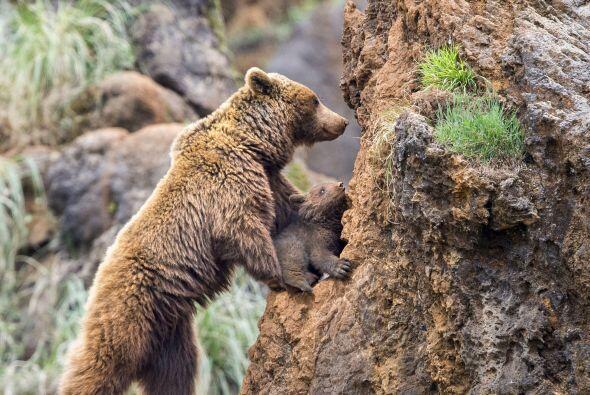 ¡El ascenso era bastante dificultoso para el pequeño.