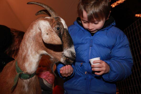 O dar de comer a simpáticos animalitos como si estuvieran en un rancho.