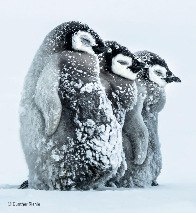 Las espectaculares imágenes de la vida salvaje 2016 © Gunther Riehle_Wil...