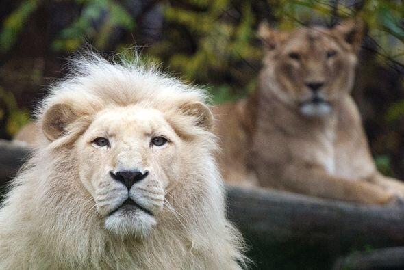 Los impresionantes animales que disfrutaban de su espacio en el zool&oac...