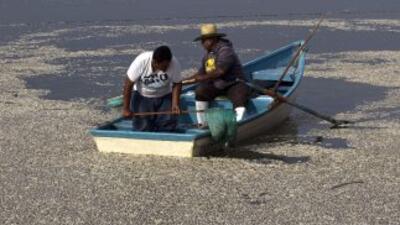 Dos hombres tratan de sacar cientos de peces muertos en la laguna de Caj...