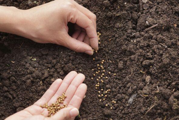 Mayor densidad nutritiva, por producirse en suelos mineralizados y en am...