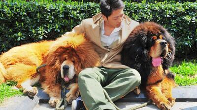 Un hombre paga casi 2 millones de dólares por un perro