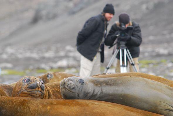 Los expertos captan toda la belleza del planeta con sus lentes.