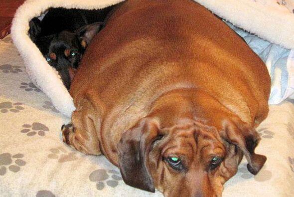El trabajo para este perrito inició en agosto de 2012, cuando fue puesto...