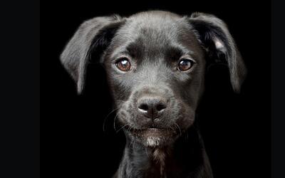 Concurso perros