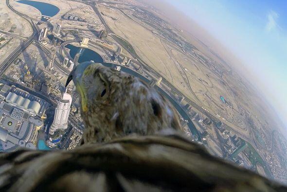 ¿Miedo a las alturas