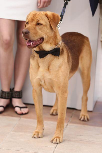 En la historia Hagen es el perro al que Lili una adolescente de 13 años...