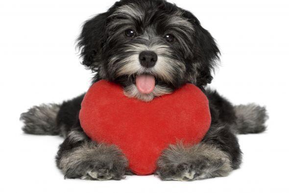 Tu mascota siempre te ve con ojos de amor y eres la más bella del mundo.